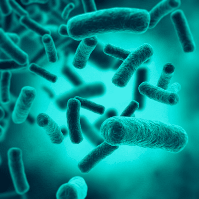 [Contre le virus #2] Bactérie Prevotella et Covid-19